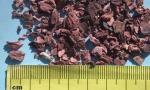 Pelargonium 5mm  unsifted (2) (Copy)