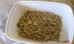 Silene capensis - chopped (Copy)