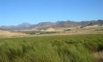rooibos farm2 (Copy)