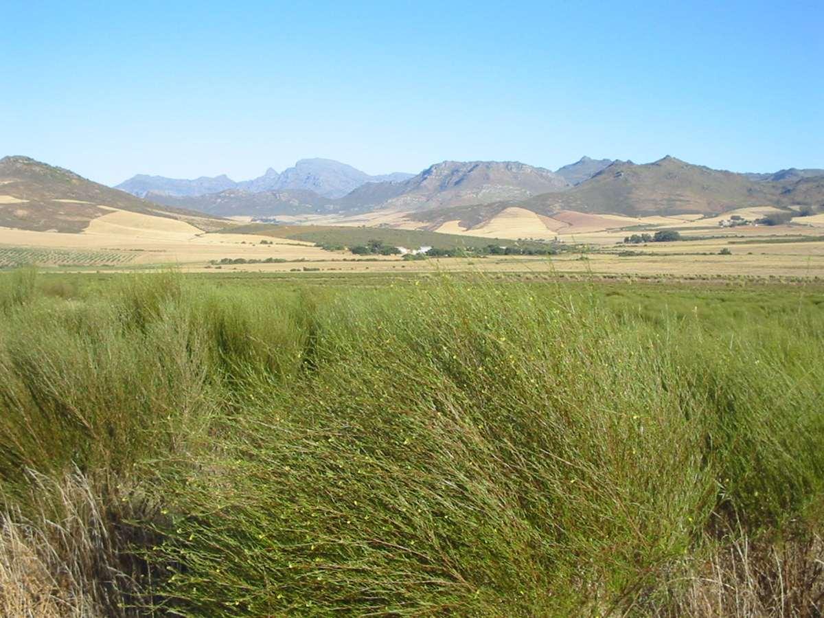 rooibos farm (Copy)